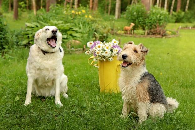 2匹の犬がヒナギクの入った黄色いバッグを持って公園の芝生に座っています。