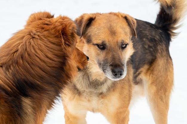 2匹の犬はお互いに対して攻撃に直面しています。攻撃的な犬