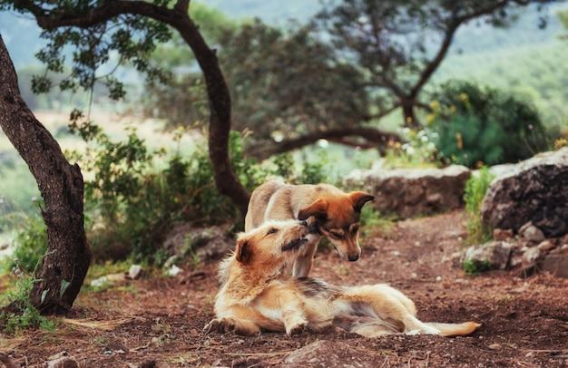 2匹の犬が互いにカルパティア山脈ウクライナヨーロッパとの戦い