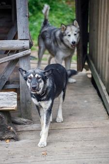 마을의 자연 속에서 두 마리의 개. 고품질 사진
