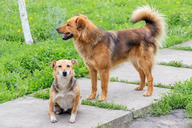緑の芝生に囲まれた庭にいる2匹の犬