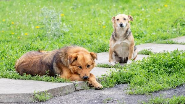 路地の庭にいる 2 匹の犬、犬 - 友達