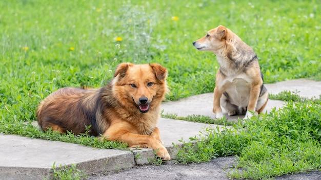 緑の芝生に囲まれた歩道の庭にいる2匹の犬