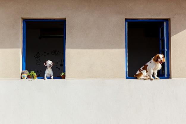 通行人の開いている窓から2匹の犬が外を見る