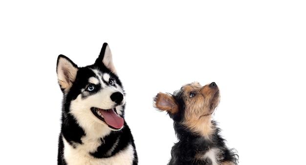 Две собаки разных размеров смотрят вверх