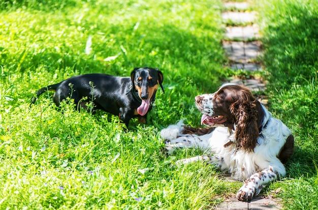 Две собаки играют в траве