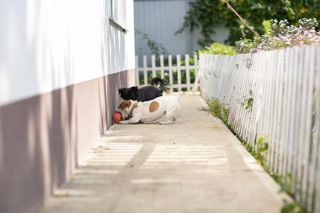 Две собаки играют с мячом возле дома