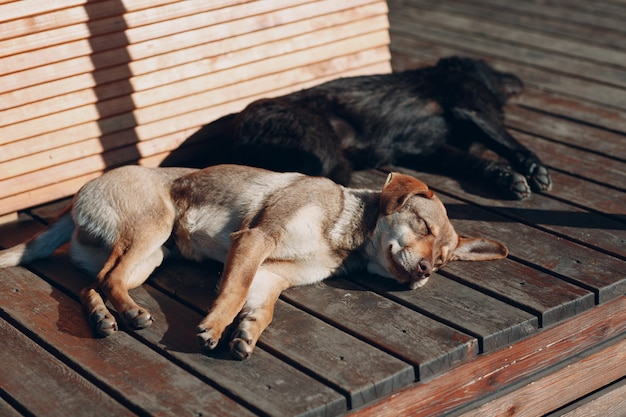 Two dogs sleeping on sunny street