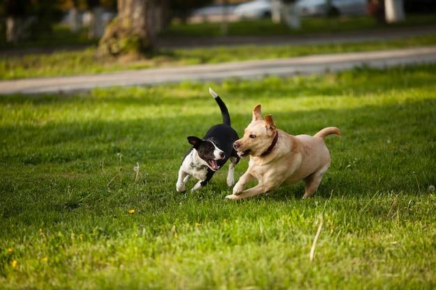 公園の緑の芝生の上を歩く2匹の犬