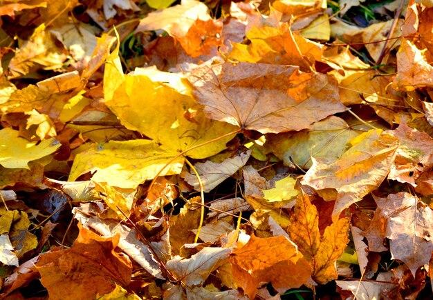乾燥した葉の上に横たわっている2つの乾燥した葉