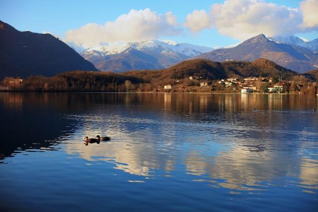 두 마리의 오리가 알프스 산맥의 avigliana 호수에서 수영합니다.
