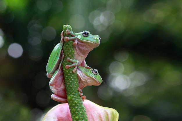 Two dumpy frog sitting on green flower