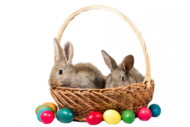 Two easter gray bunnies in a basket with eggs, isolate