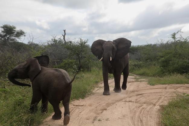 道路に立っている2頭の象