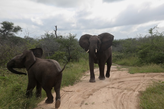 Two elephants standing on the road