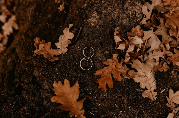 Two engagement gold wedding rings lie on a stone overgrown with moss among orange dried fallen oak leaves from trees