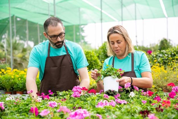 花を植える方法について話し合う2人の経験豊富な庭師