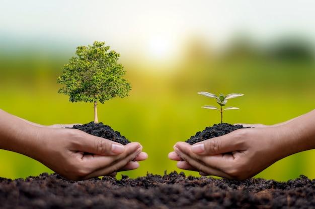 두 명의 농부가 땅에 묘목을 심고 있고 사회적 재조림과 산림 복원의 개념으로 녹색 배경이 흐릿합니다.