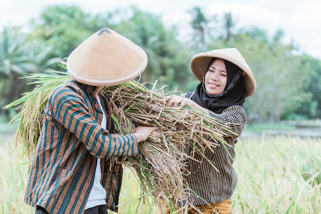 The two farmers helped each other to raise the rice plants that were harvested when they harvested together in the fields