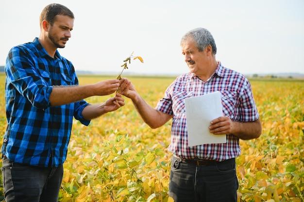 Два фермера стоят в поле и изучают урожай сои перед сбором урожая.