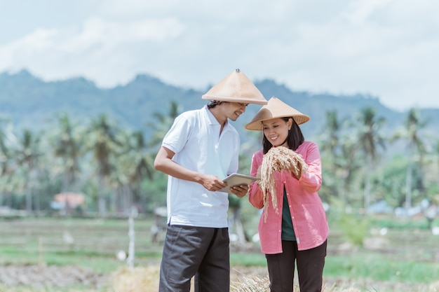 Two farmers wearing hats holding rice plants and observing the yield while standing using tablets in the fields
