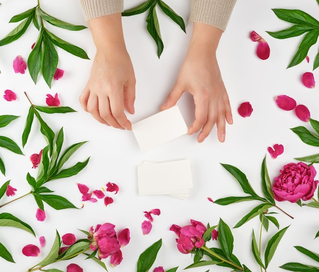 Two female hands holding empty white paper cards and burgundy flowering peonies with green leaves