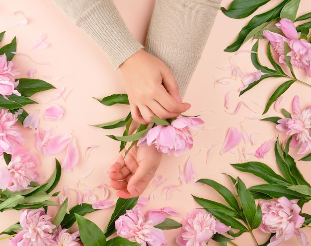 Two female hands and pink blooming peonies