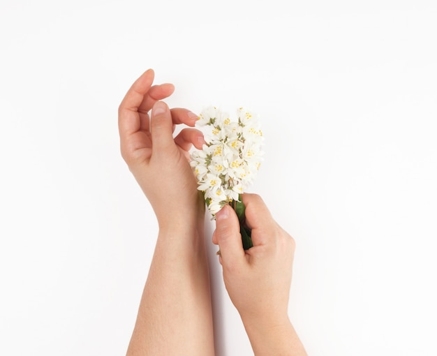 Two female hands and small white flowers on a white