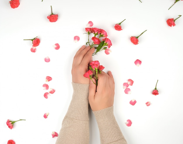 Two female hands with smooth skin, white background with pink rosebuds