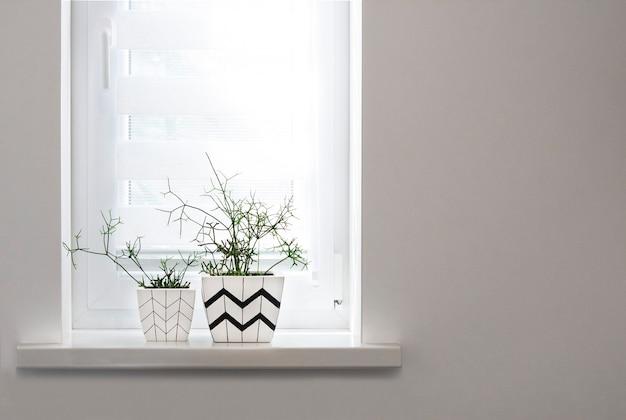 それらに植えられたrhipsalis植物の幾何学模様の2つの植木鉢が窓辺に立つ