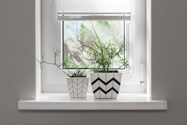 Two flower pots with geometric patterns with rhipsalis plants planted in them stand on windowsill with partially raised roller blind