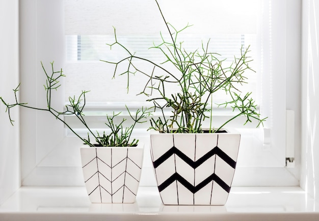 Two flower pots with geometric patterns with rhipsalis plants planted in them stand on windowsill