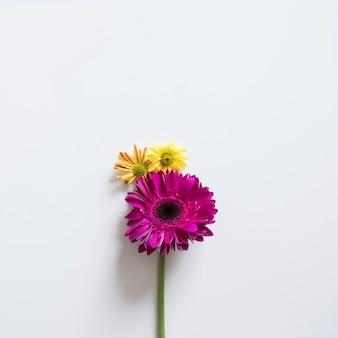 Due fiori per la primavera