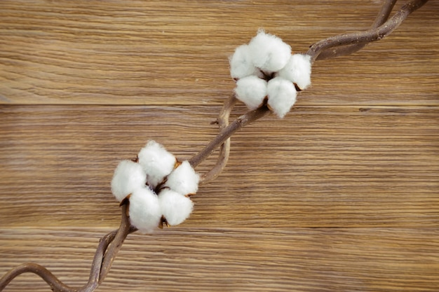 Two fluffy cotton plant flowers on twig on natural wooden desk. top view. selective focus. background for spa concept.
