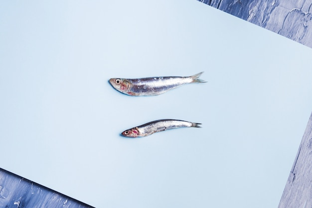Two fresh anchovies on blue background