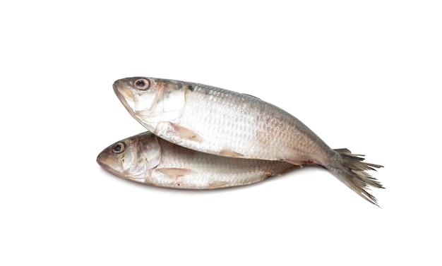 격리 된 흰색 배경에 두 신선한 힐사 물고기 닫기보기