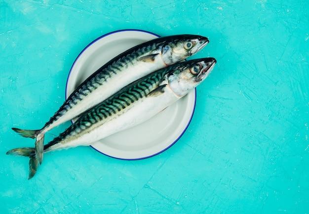 青の白いプレートに2つの新鮮なサバ