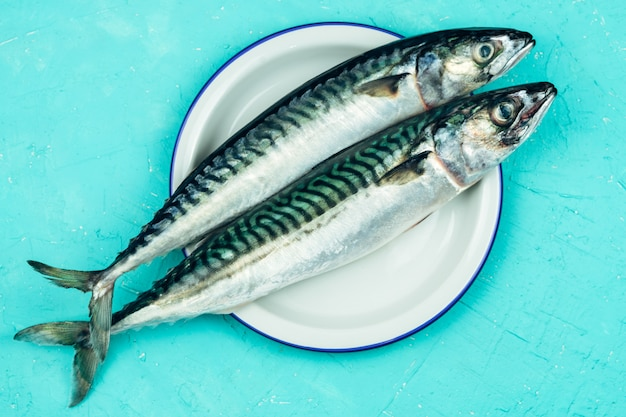 Two fresh mackerel on a white plate on a blue background.