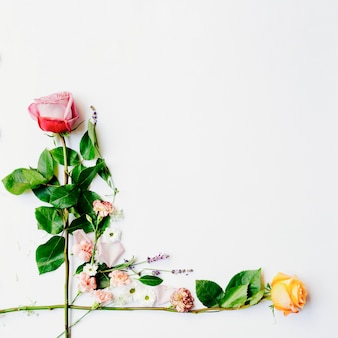 Two fresh roses arranged over white background