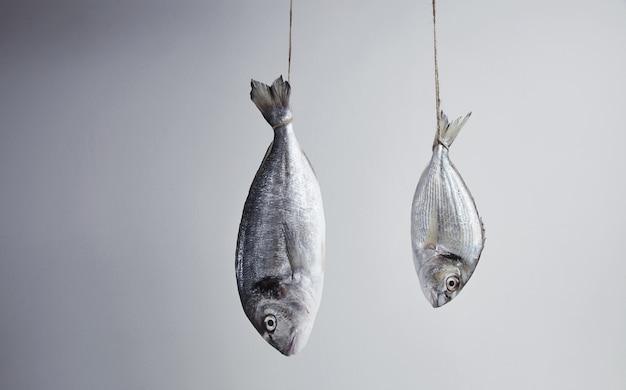Два свежих морских леща повешены за хвост на веревке