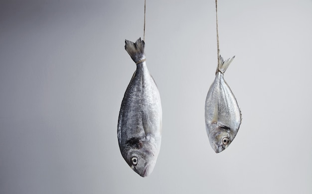 Two fresh sea breams hanged for tail on rope