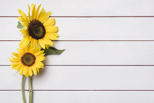 Two fresh sunflowers on wooden plank backdrop