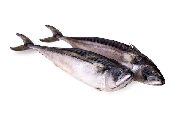 Two freshly frozen mackerel isolated on a white background
