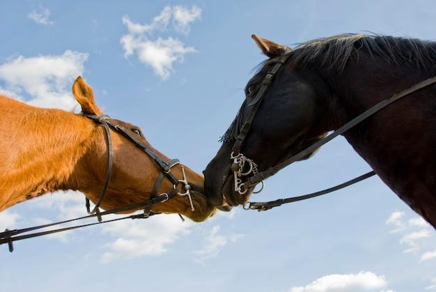 2人の友人の馬