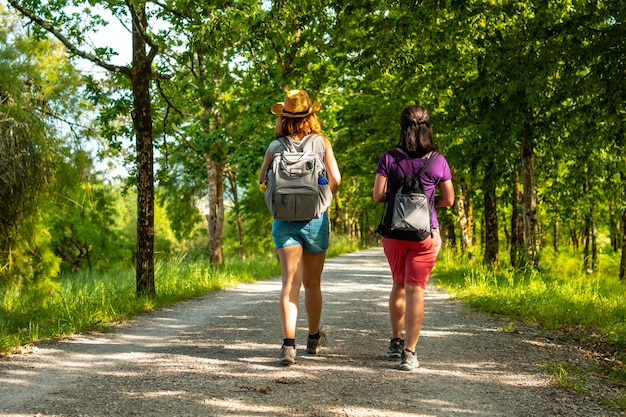 Two friends walking along the beautiful path between trees in the urdaibai marshes, a bizkaia biosphere reserve next to mundaka. basque country
