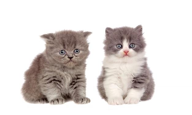 Two funny grey cats lookin up at camera