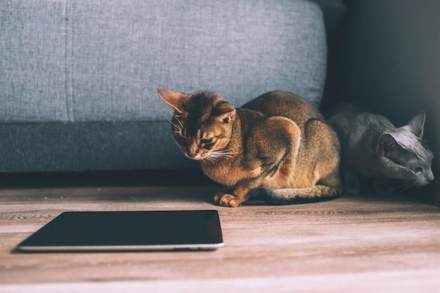 바닥에 태블릿 화면을보고 두 재미 있은 새끼 고양이.