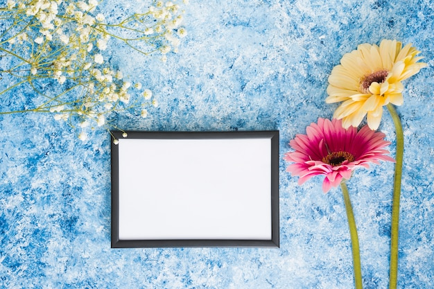 Two gerbera flowers with blank frame