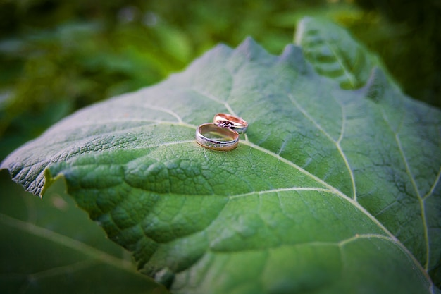 Two golden wedding rings lie on leaves plant.