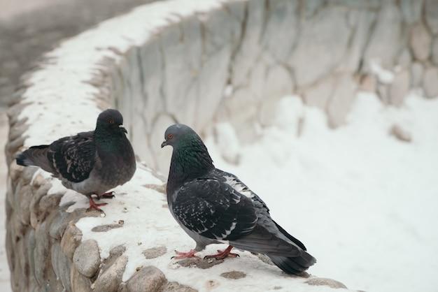 Два серых голубя напротив друг друга на круглом заборе в парке зимой